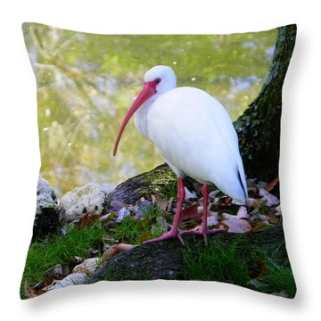 White Ibis Throw Pillow by Judy Wanamaker