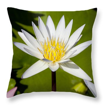 White Lotus Throw Pillow by Kelley King