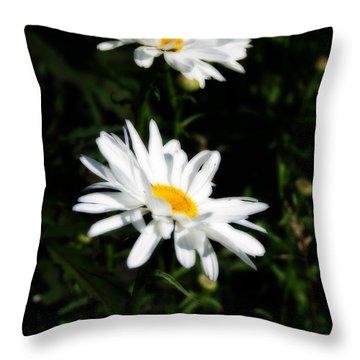 White Shasta Daisies Throw Pillow by Kay Novy