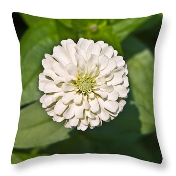 Throw Pillow featuring the photograph White Zinnia And Green Leaves by Susan Leggett