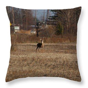 Whitetail Deer Throw Pillow by Randy J Heath