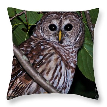 Throw Pillow featuring the photograph Who Are You 2 by Cheryl Baxter