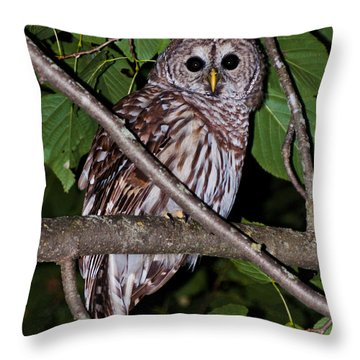 Throw Pillow featuring the photograph Who Are You by Cheryl Baxter