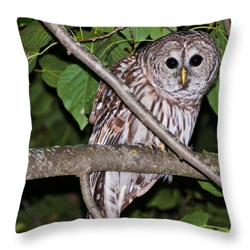 Throw Pillow featuring the photograph Who Are You Looking At by Cheryl Baxter