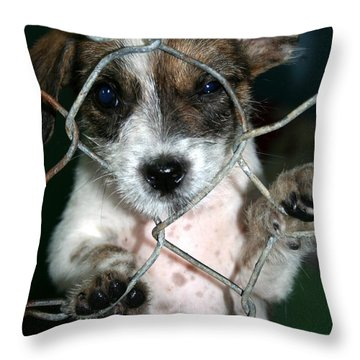 Why Throw Pillow by Nola Lee Kelsey