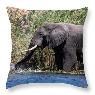 Throw Pillow featuring the photograph Wild Elephant Splashing In Water by Karen Lee Ensley