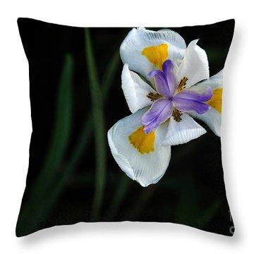 Wild Iris Throw Pillow by Kaye Menner