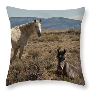 Throw Pillow featuring the photograph Wild Mustangs Stallions At Sand Wash by Daniel Hebard