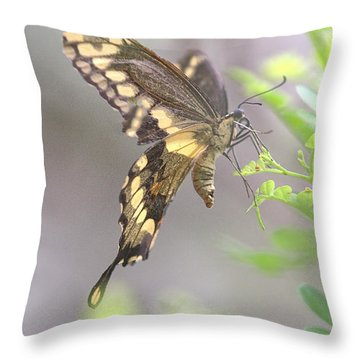 Throw Pillow featuring the photograph Winged Ballet by Anne Rodkin