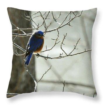 Winter Bluebird Throw Pillow by Rebecca Sherman