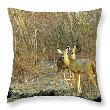 Winter Does Throw Pillow by Marty Koch