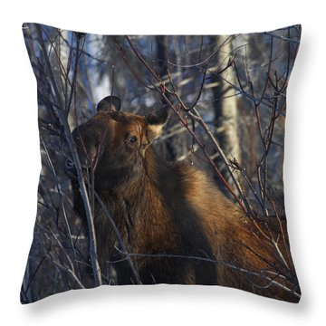 Throw Pillow featuring the photograph Winter Food by Doug Lloyd