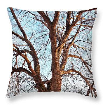 Throw Pillow featuring the photograph Winter Light by Chalet Roome-Rigdon