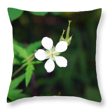 Winter Park White Throw Pillow