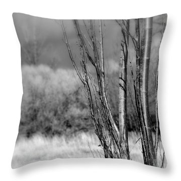Throw Pillow featuring the photograph Winters Branch by Kathleen Grace