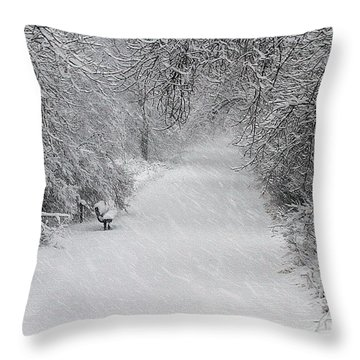 Throw Pillow featuring the photograph Winter's Trail by Elizabeth Winter
