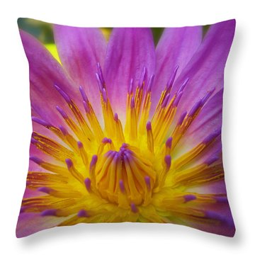 Wishing On A Star Throw Pillow by Rachel Cohen