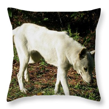 Throw Pillow featuring the photograph Wolf 2 by Maria Urso