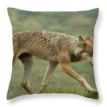 Wolf Trots Across Tundra Hunting Throw Pillow
