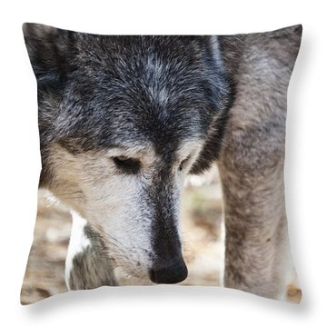Wolfs Beauty Throw Pillow by Karol Livote