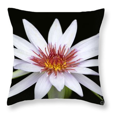 Wonderful White Water Lily Throw Pillow by Sabrina L Ryan