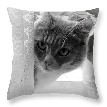 Wondering. Kitty Time Throw Pillow by Jenny Rainbow