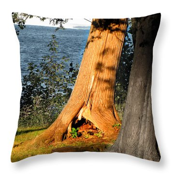 Wonderlands Rabbit Hole Throw Pillow by Ms Judi