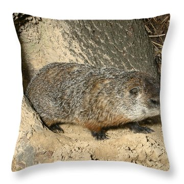 Woodchuck Throw Pillow by Ted Kinsman