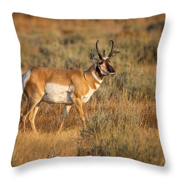 Wyoming Pronghorn Throw Pillow by Ronald Lutz