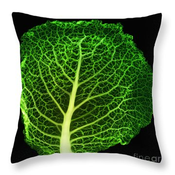 X-ray Of Cabbage Leaf Throw Pillow by Ted Kinsman