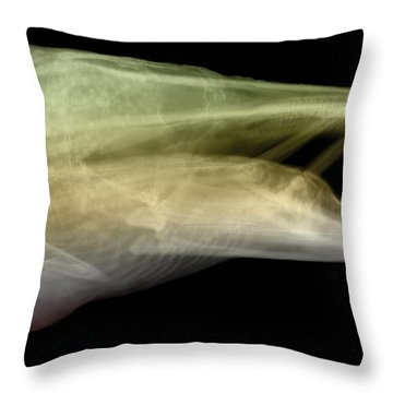 X-ray Of Muskie Throw Pillow by Ted Kinsman