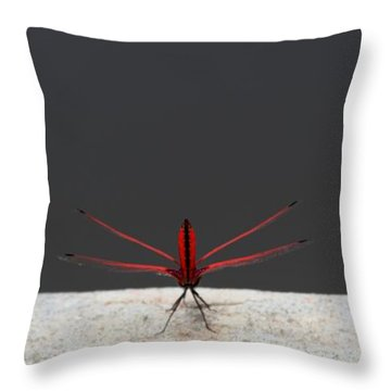 X Wing Dragonfly Throw Pillow by Nola Lee Kelsey
