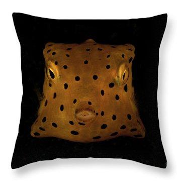 Trunkfish Throw Pillows
