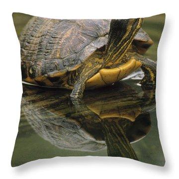Yellow-bellied Slider Trachemys Scripta Throw Pillow by Gerry Ellis