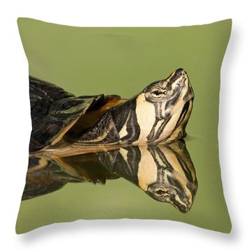 Yellow-bellied Slider Trachemys Scripta Throw Pillow by Ingo Arndt
