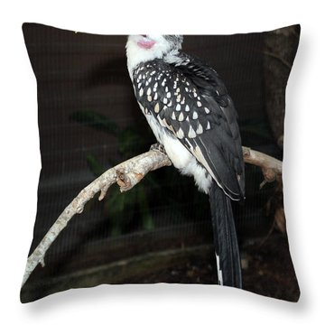 Throw Pillow featuring the photograph Yellow-billed Hornbill by Kathy  White