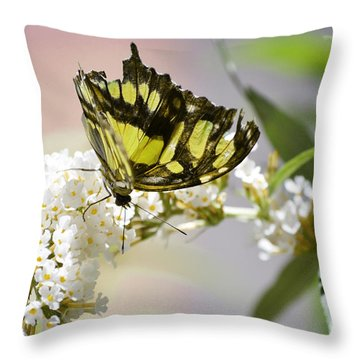 Yellow Butterfly Beauty Throw Pillow by Andrea Hazel Ihlefeld