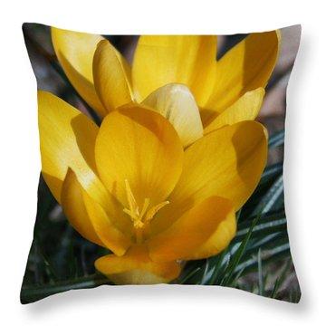 Yellow Crocus Throw Pillow by Karen Harrison