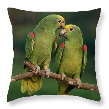Yellow-crowned Parrot Amazona Throw Pillow by Thomas Marent