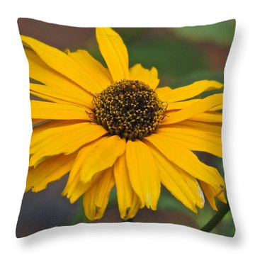 Throw Pillow featuring the photograph Yellow Gerber Daisy by Eve Spring