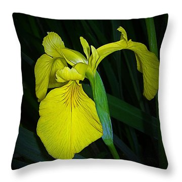 Yellow Iris Throw Pillow by Judi Bagwell