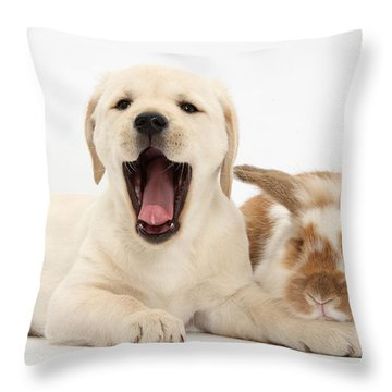 Yellow Lab Puppy With Rabbit Throw Pillow by Mark Taylor