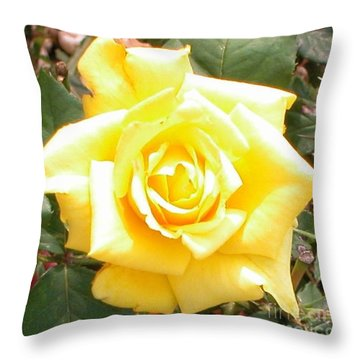 Yellow Rose At High Noon Throw Pillow by Alys Caviness-Gober