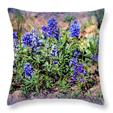 Yellowstone Lupine Blue Throw Pillow by Carol Groenen