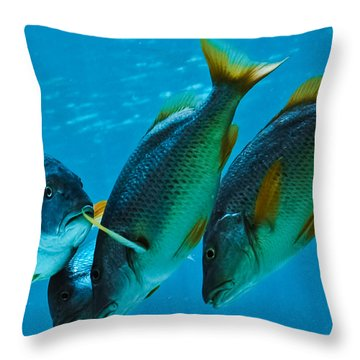 Yo Yous Headin Da Wrong Way Throw Pillow by DigiArt Diaries by Vicky B Fuller