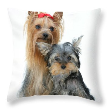 Yorkshire Terriers Throw Pillow by Jane Burton