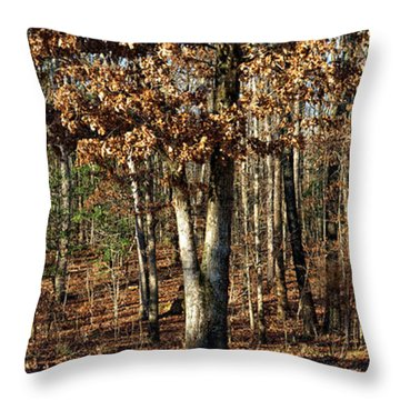 You Can Dream Throw Pillow by Shari Nees