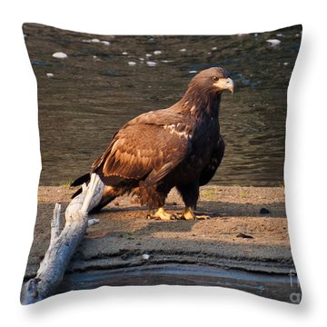 Throw Pillow featuring the photograph Young And Proud by Cheryl Baxter