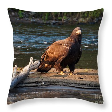 Throw Pillow featuring the photograph Young And Wise by Cheryl Baxter