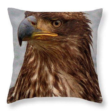 Young Bald Eagle Portrait Throw Pillow